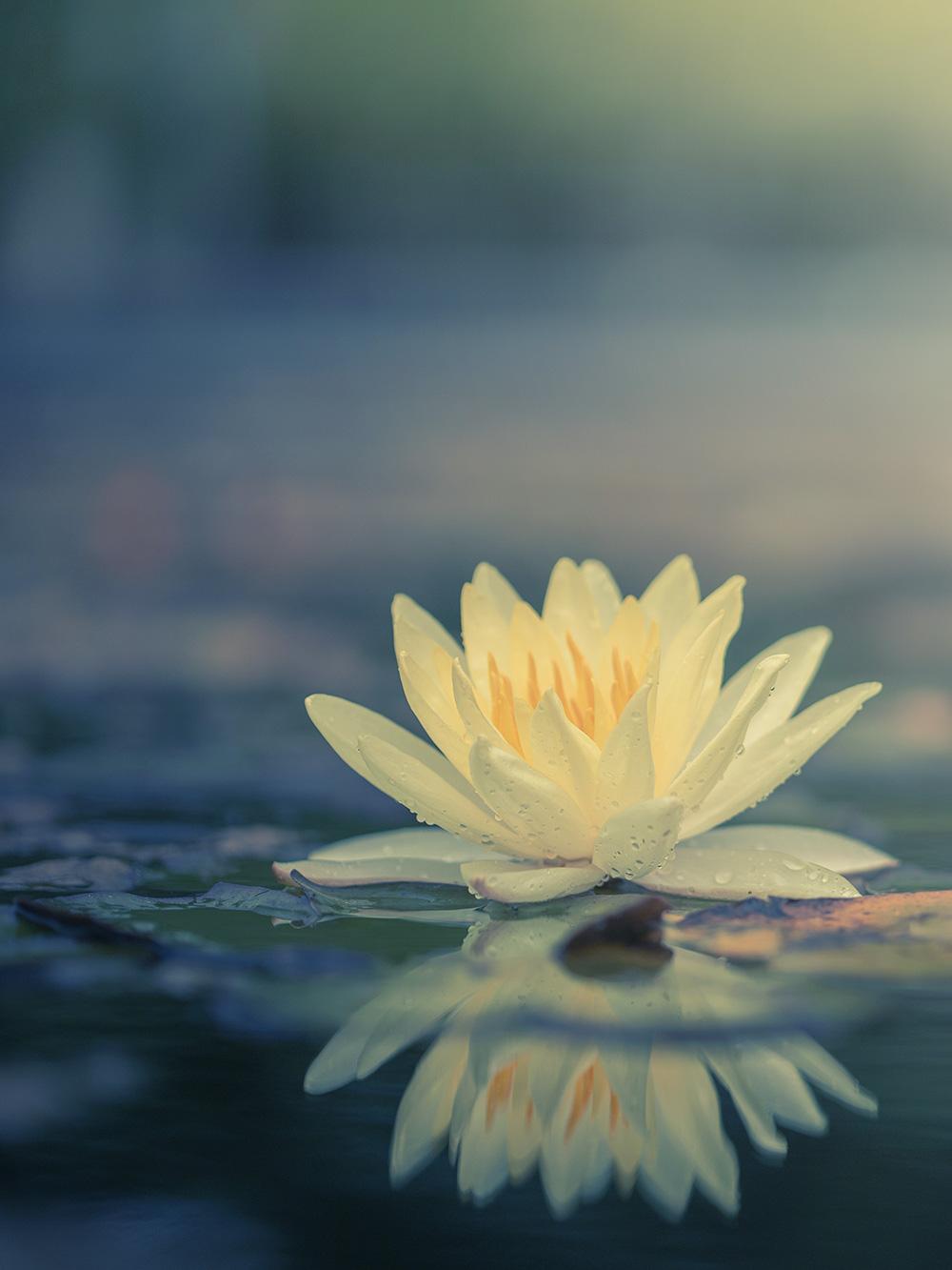 Das Lotus Mudra – Eine Yoga-Meditation der Liebe